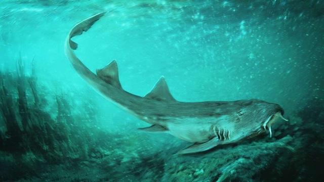 Phát hiện răng hoá thạch loài cá mập cổ đại hoàn toàn mới  - 1