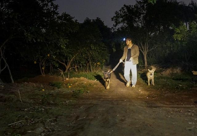 Dân trồng bưởi Diễn thả chó, thức trắng đêm chống trộm - 4
