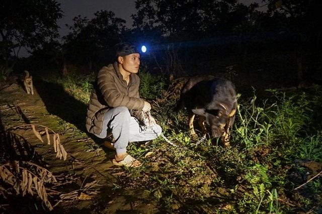 Dân trồng bưởi Diễn thả chó, thức trắng đêm chống trộm - 5