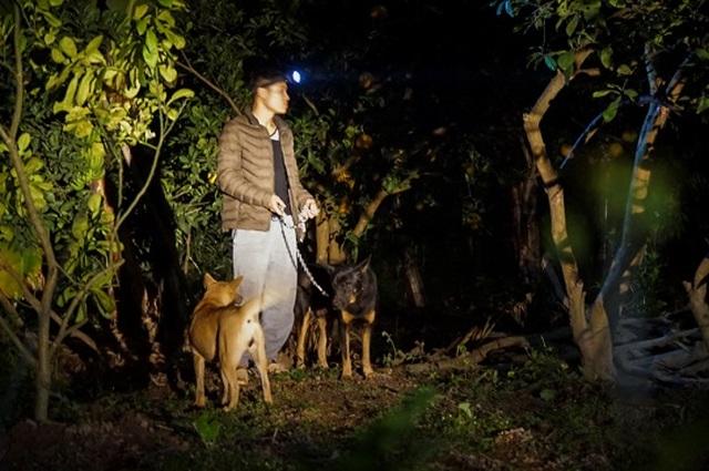 Dân trồng bưởi Diễn thả chó, thức trắng đêm chống trộm - 9