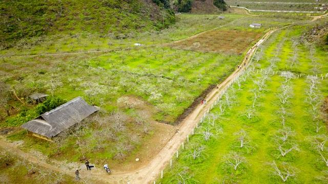 Thung lũng hoa mận Mộc Châu bung nở trước Tết Nguyên đán - 1