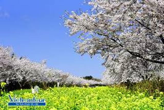 Khám phá lễ hội hoa xuân khắp thế giới - 4