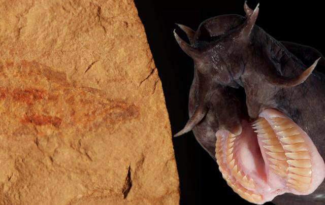 Phát hiện hoá thạch loài cá mù 100 triệu năm tuổi cực hiếm - 1