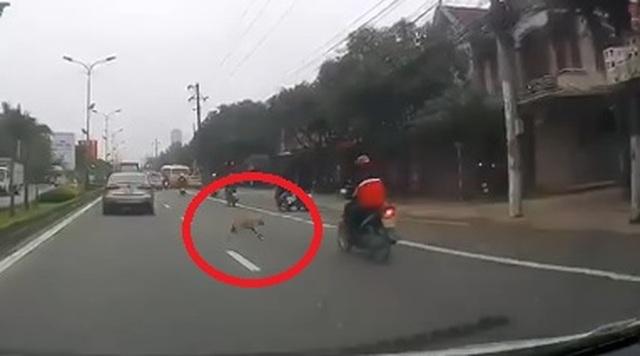 Chó thả rông khiến thanh niên đi xe máy ngã đập đầu xuống đường - 1