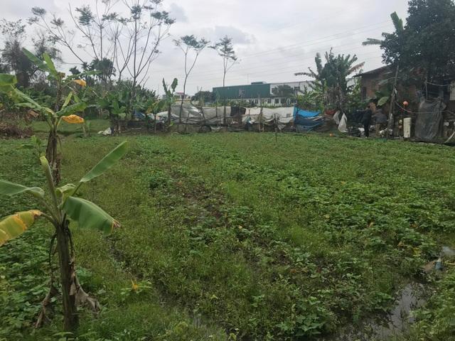 """Quảng Ngãi: Dự án trường đại học """"treo"""", 26.000 m2 đất thành... bãi sình lầy - 2"""