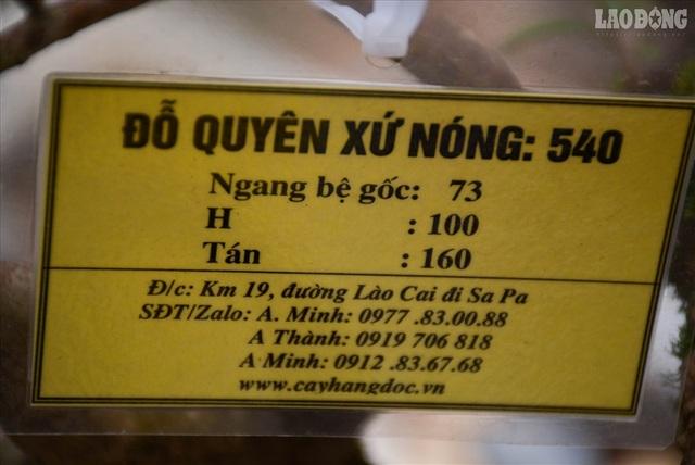 Độc lạ cây đỗ quyên 400 năm tuổi, được quát giá gần 1 tỉ đồng tại Hà Nội    - 10