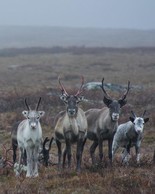 9 sự thật ấn tượng khiến Thụy Điển khác biệt hoàn toàn với thế giới - 1