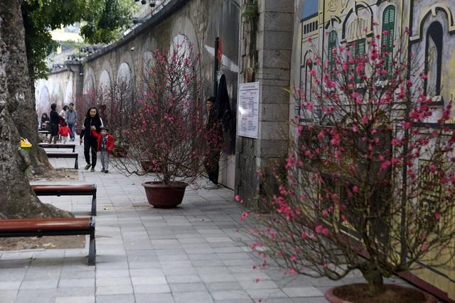 Chợ hoa phố cổ Hà Nội nhộn nhịp đón Tết - 14