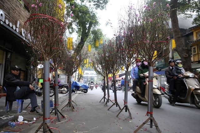 Chợ hoa phố cổ Hà Nội nhộn nhịp đón Tết - 4