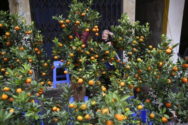 Chợ hoa phố cổ Hà Nội nhộn nhịp đón Tết - 6