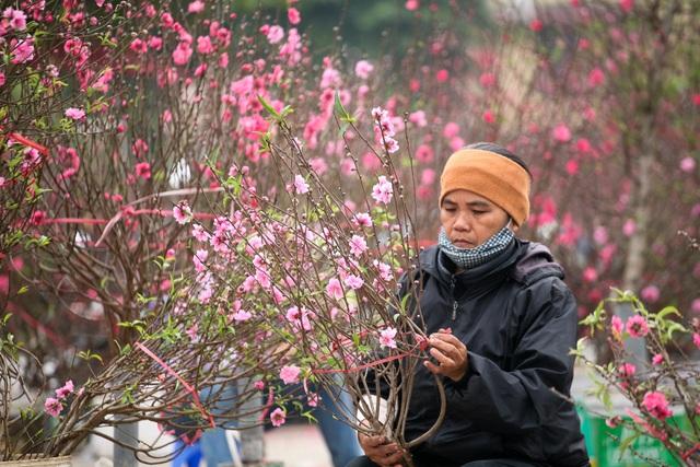 Vườn đào Nhật Tân đỏ rực những ngày giáp Tết - 10