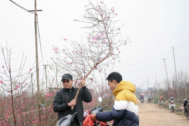 Vườn đào Nhật Tân đỏ rực những ngày giáp Tết - 11