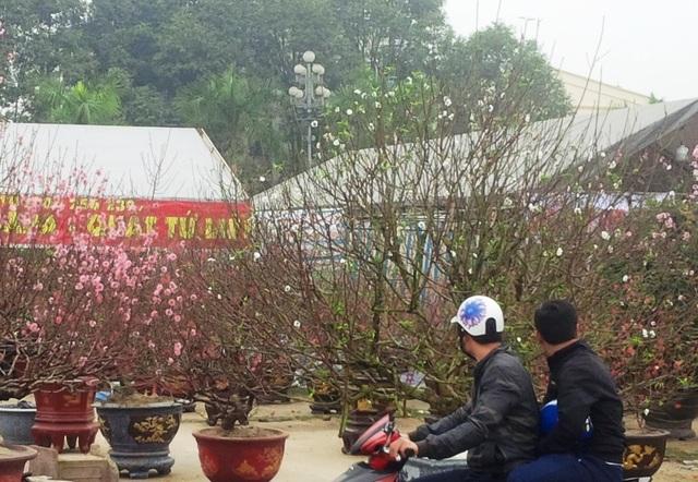 Cây hoa đào trắng tinh khôi hút khách ở chợ hoa xuân - 6