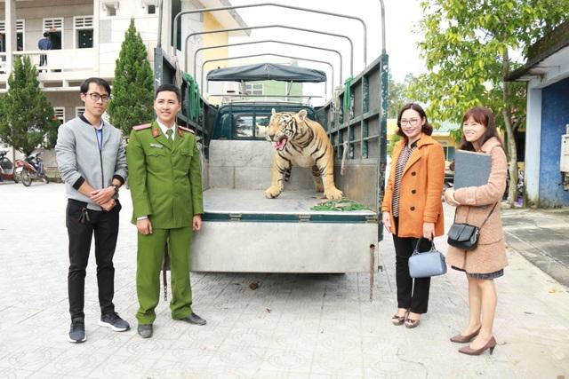 Chuyển giao hổ Bengal nhồi bông cho Bảo tàng Thiên nhiên - 4