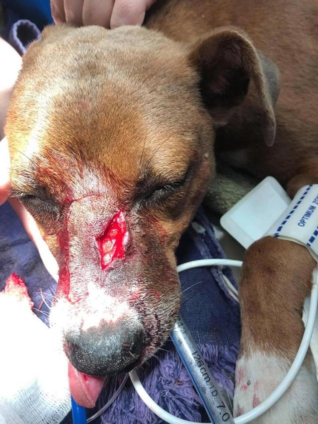 Bị mũi tên xuyên từ đầu đến lưng, chú chó vẫn may mắn sống sót - 5