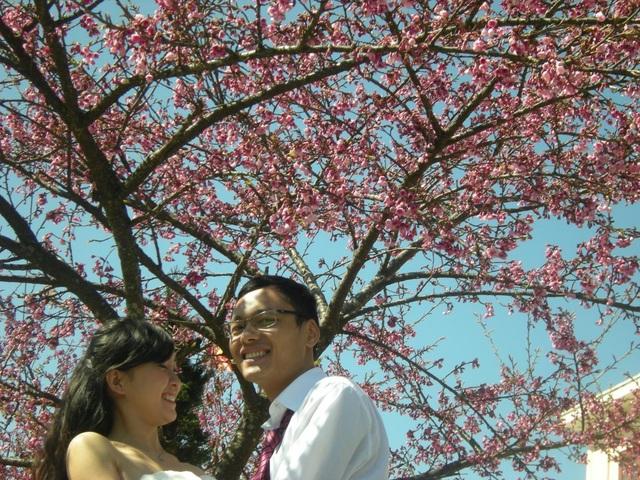 Hoa anh đào Nhật khoe sắc tuyệt đẹp dưới chân núi Fansipan - 4