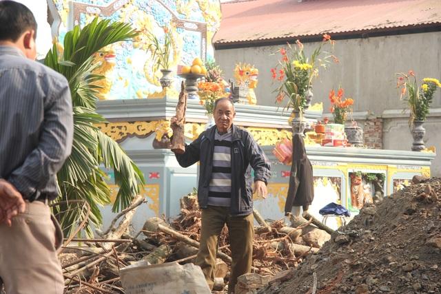 Cận cảnh buổi chặt hạ cây sưa trăm tỷ ở Hà Nội - 10