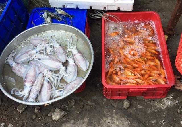 Loạn giá bán cá chép ngày đưa ông Công, ông Táo - 5