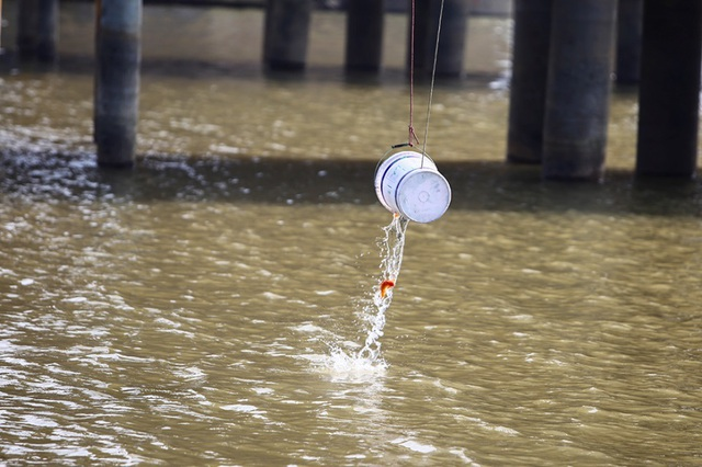 Hà Nội: Người nước ngoài ra sông đứng giúp người dân thả cá chép - 11
