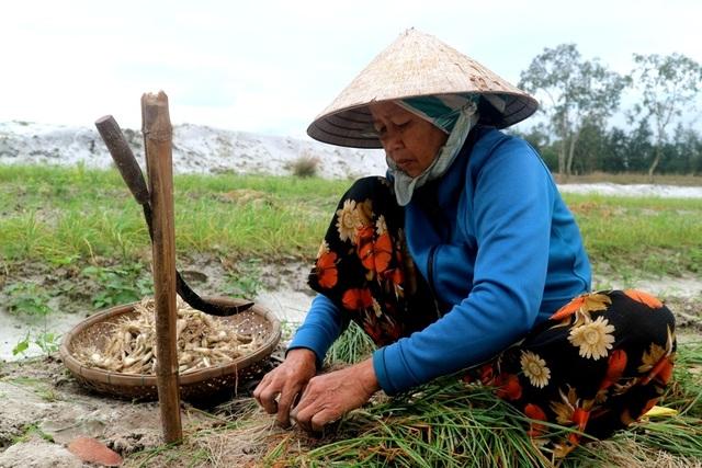 Nông dân Quảng Nam mất mùa kiệu Tết