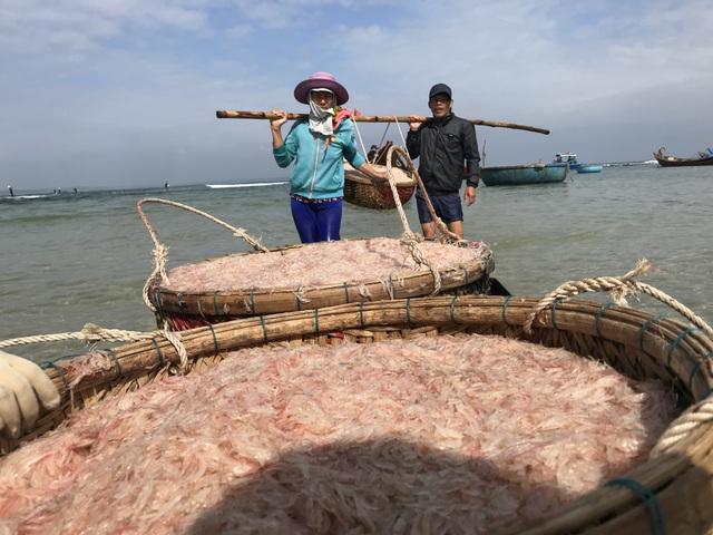 Cận Tết, ngư dân Quảng Ngãi trúng đậm lộc biển - 2