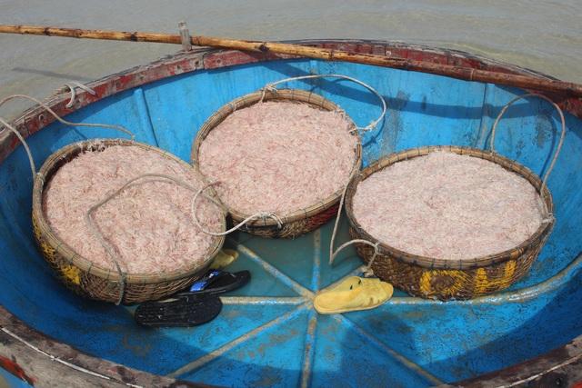 Cận Tết, ngư dân Quảng Ngãi trúng đậm lộc biển - 6