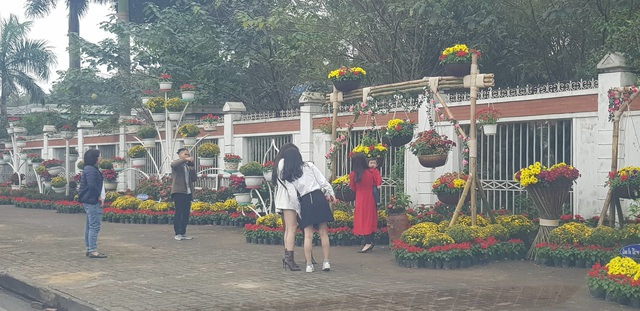 Con đường hoa xuân độc đáo Thành Vinh - 6