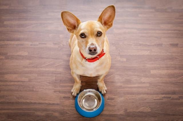 Chó nuôi với chế độ ăn không ngũ cốc dẫn tới nguy cơ mắc bệnh tim - 1