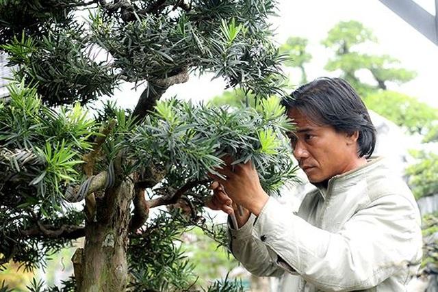 Ngắm vườn bonsai cực chất giá trăm tỷ đồng ở Bình Định - 10