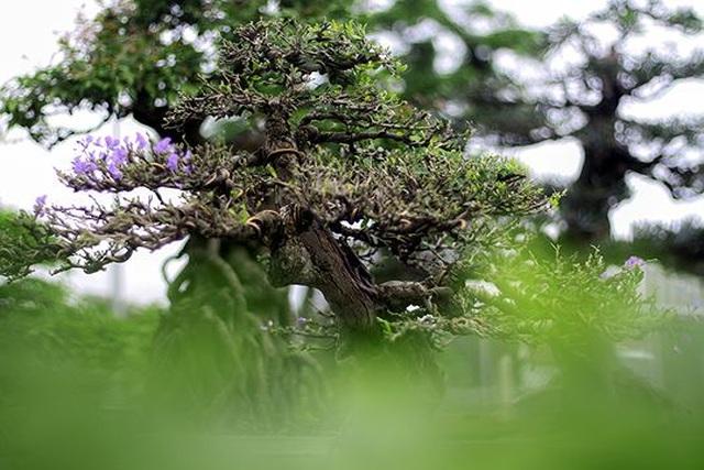 Ngắm vườn bonsai cực chất giá trăm tỷ đồng ở Bình Định - 11