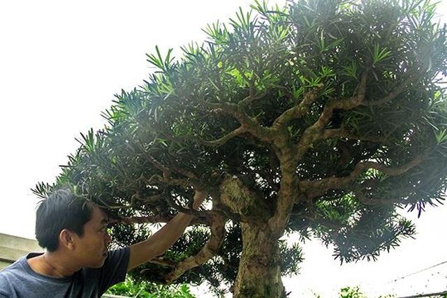 Ngắm vườn bonsai cực chất giá trăm tỷ đồng ở Bình Định - 3