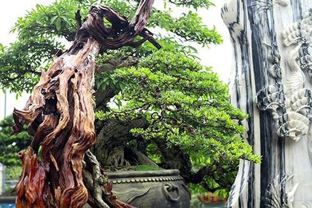 Ngắm vườn bonsai cực chất giá trăm tỷ đồng ở Bình Định - 5