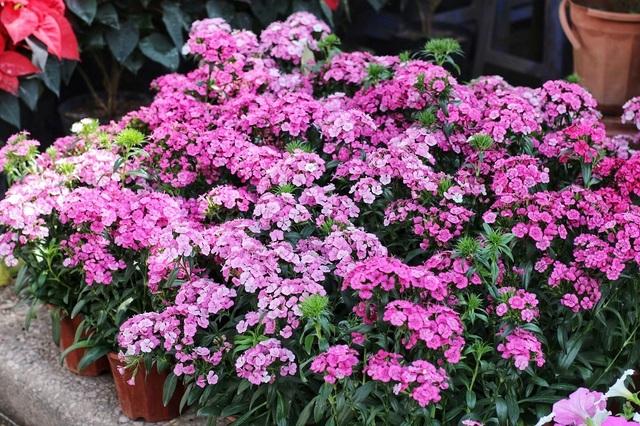 Ngàn hoa khoe sắc đón Xuân tại con đường hoa lớn nhất Hà Nội - 12