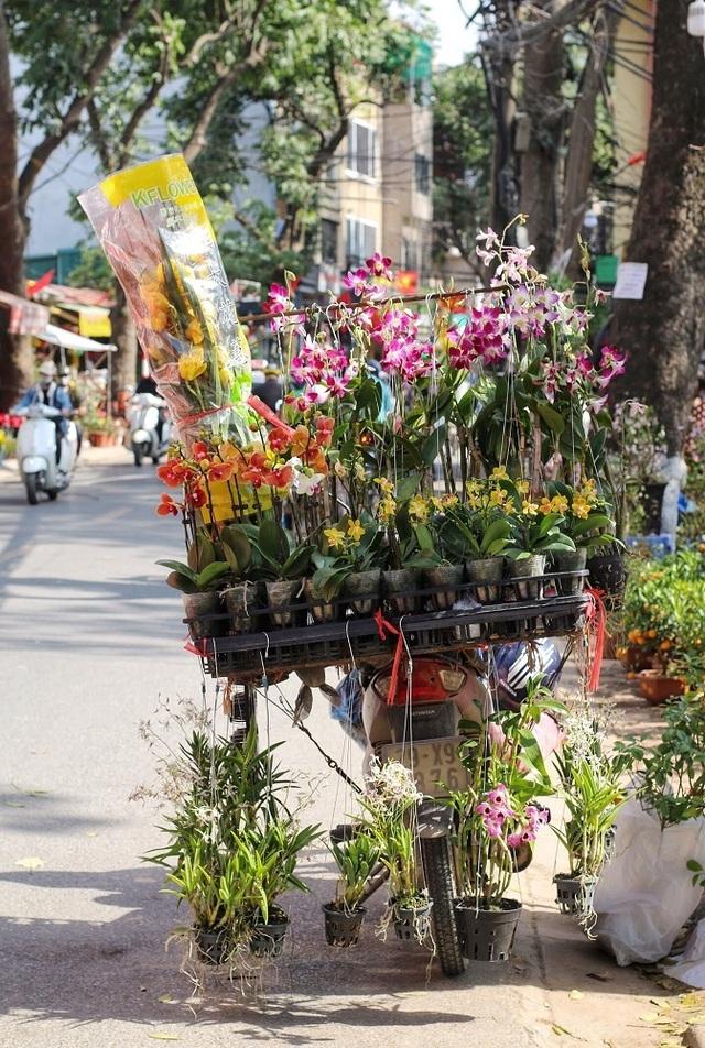 Ngàn hoa khoe sắc đón Xuân tại con đường hoa lớn nhất Hà Nội - 3