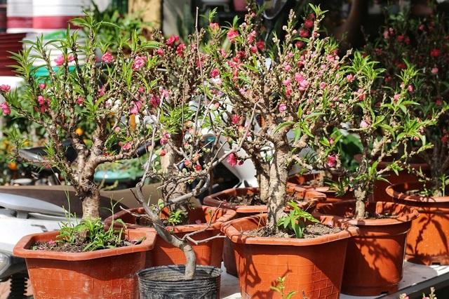 Ngàn hoa khoe sắc đón Xuân tại con đường hoa lớn nhất Hà Nội - 4