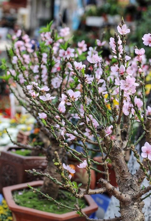 Ngàn hoa khoe sắc đón Xuân tại con đường hoa lớn nhất Hà Nội - 5