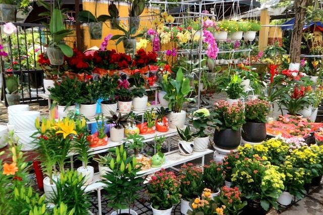 Chợ hoa Tết Hội An 2019