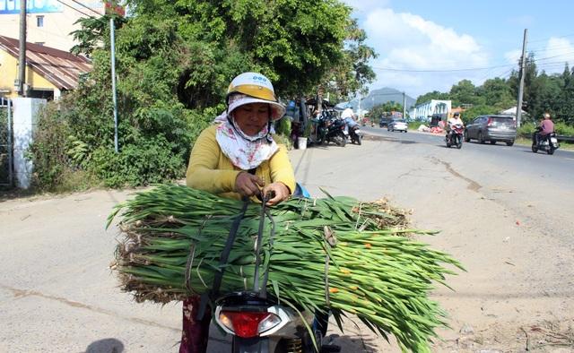 Phú Yên: Người trồng hoa Lay ơn lao đao vì giá giảm sâu - 9