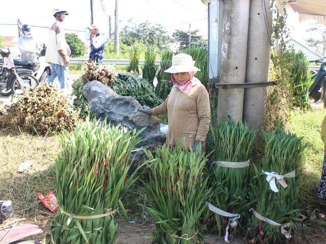 Phú Yên: Người trồng hoa Lay ơn lao đao vì giá giảm sâu - 7