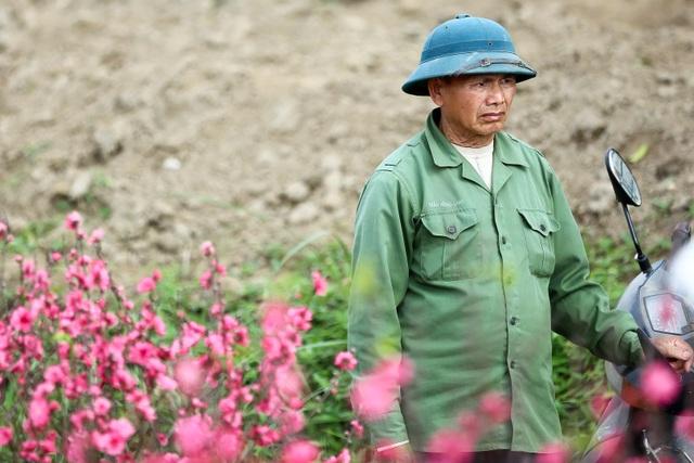 Người trồng đào Nhật Tân lo mất Tết do đào nở rộ - 6