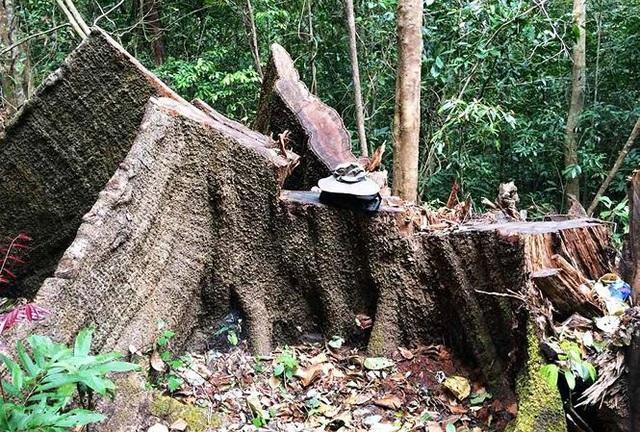 Chất vấn Thủ tướng về lệnh đóng cửa rừng trên rất thiêng nhưng dưới không nghiêm - 1