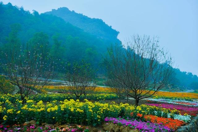 Hàng trăm loại hoa khoe sắc tại lễ hội Xuân Bái Đính - 3