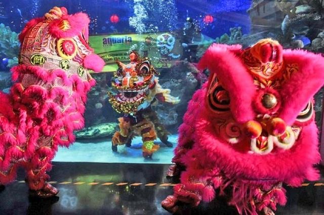 Độc đáo màn múa lân dưới nước chào đón năm mới - 1