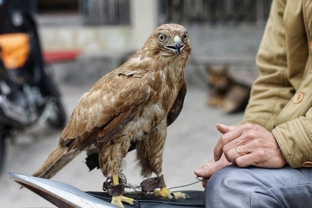 Khám phá chợ chim độc đáo, lớn nhất Hà Nội ngày cuối năm - 3