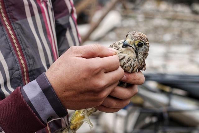 Khám phá chợ chim độc đáo, lớn nhất Hà Nội ngày cuối năm - 9
