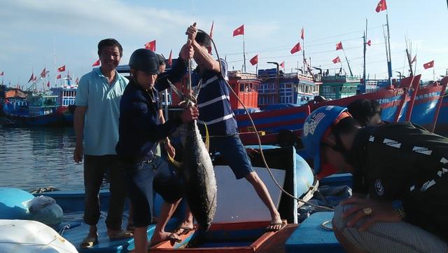 Quảng Ngãi: Ngư dân đảo tiền tiêu hối hả vào bờ đón Tết Nguyên đán - 2