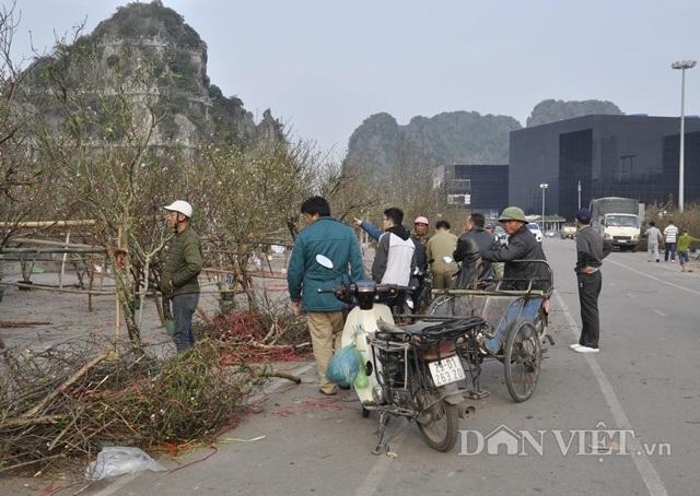 Quảng Ninh: Chở thuê đào, quất Tết, hái ngon ơ tiền triệu/ngày - 2