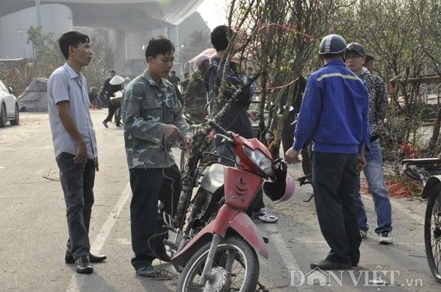 Quảng Ninh: Chở thuê đào, quất Tết, hái ngon ơ tiền triệu/ngày - 3