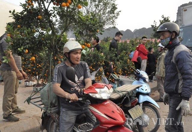 Quảng Ninh: Chở thuê đào, quất Tết, hái ngon ơ tiền triệu/ngày - 4
