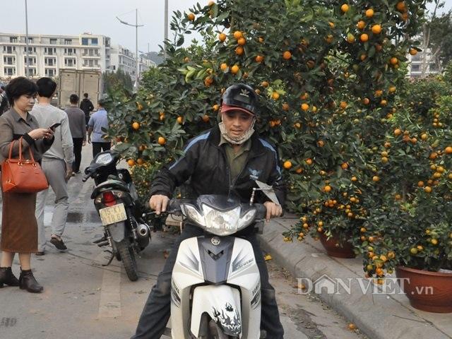 Quảng Ninh: Chở thuê đào, quất Tết, hái ngon ơ tiền triệu/ngày - 5